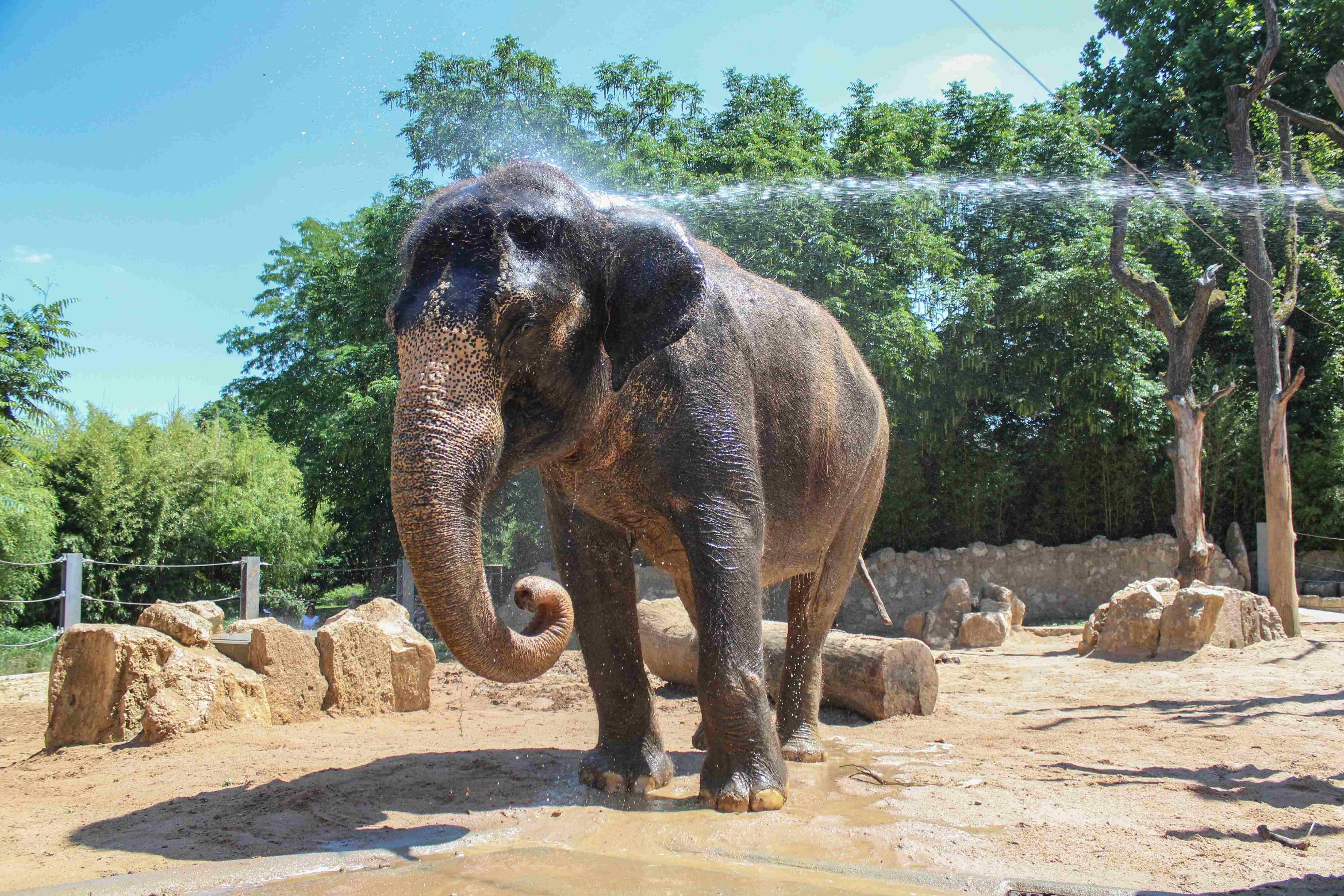 Stuttgart Zoo Eintritt